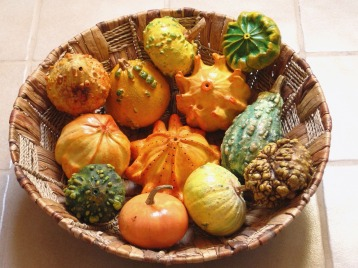 decorative-squashes-895271_1280